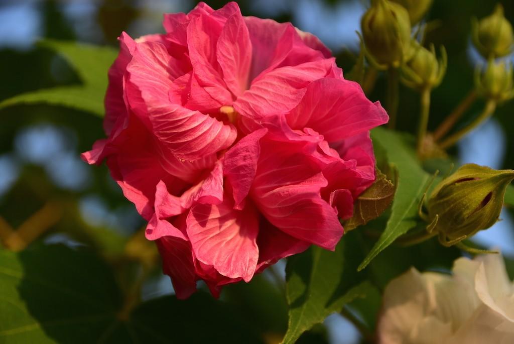 HC-flower